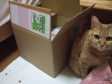2008_junichibi1920077