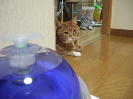 2008_junichibi1920084