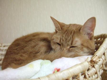 2008_junichibi1930040