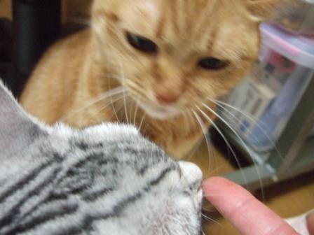 2008_junichibi1930091