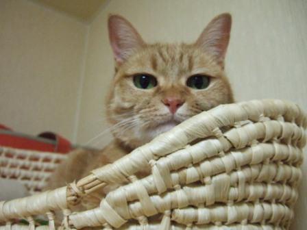 2008_junichibi1960011
