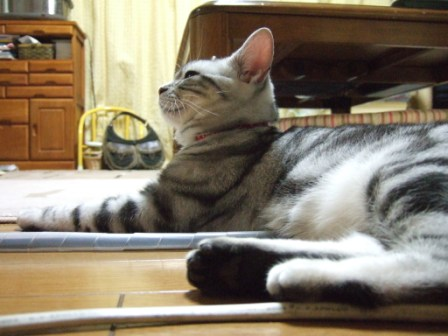 2008_junichibi1960016