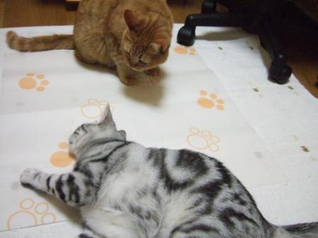 2008_junichibi1970043