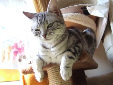 2008_junichibi1980127