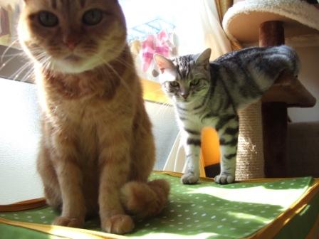 2008_junichibi1980132