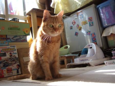 2008_junichibi1990019