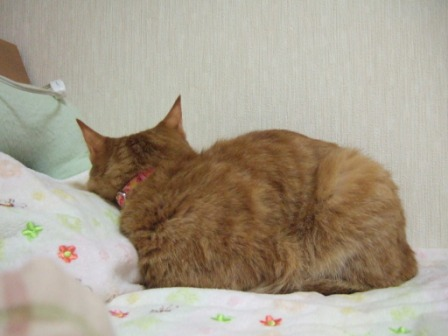 2008_junichibi2000062
