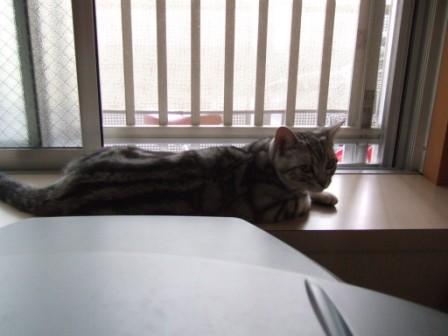 2008_junichibi2010013