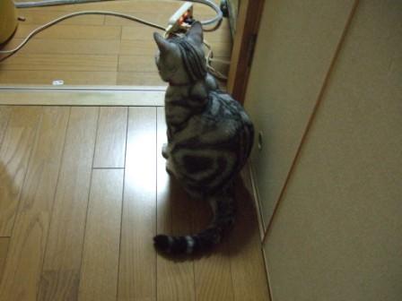 2008_junichibi2030213