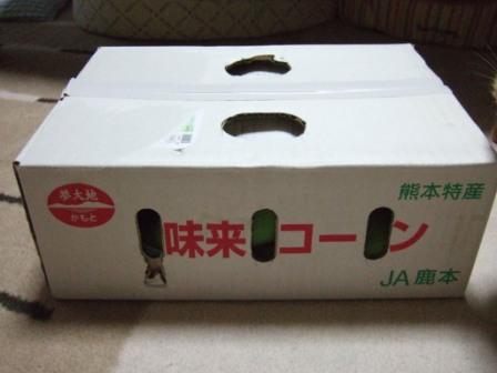 2008_junichibi2050058