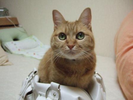 2008_junichibi2080009