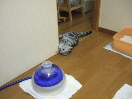 2008_junichibi2080011
