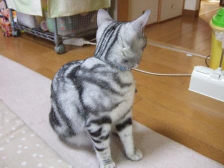 2008_junichibi2090063