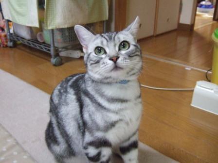 2008_junichibi2090065