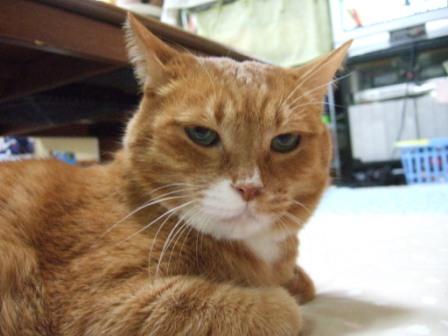 2008_junichibi2090069