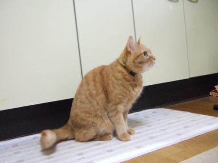 2008_junichibi2090076
