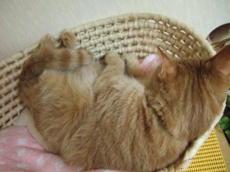 2008_junichibi2110007