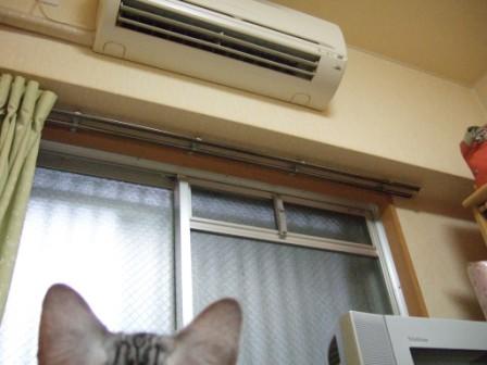 2008_junichibi2110014