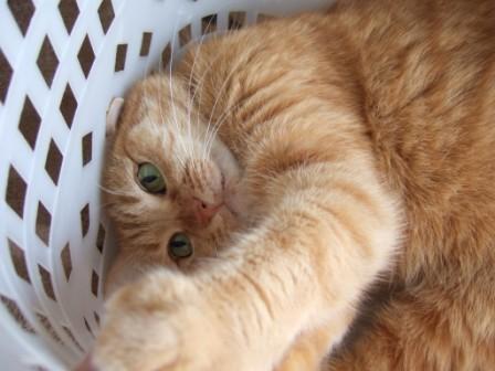 2008_junichibi2110044