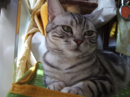 2008_junichibi2110060