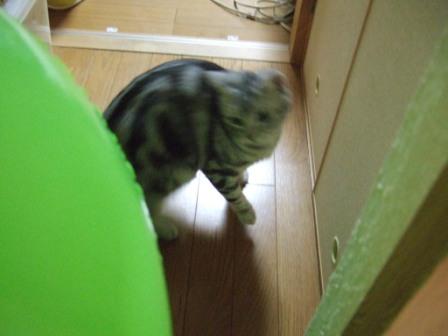 2008_junichibi2140058