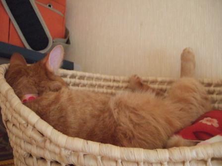 2008_junichibi2200003