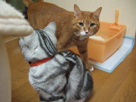 2008_junichibi2200023