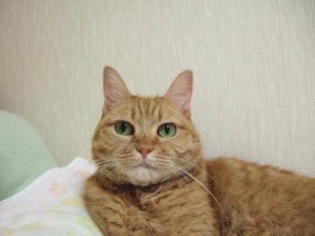 2008_junichibi2220076