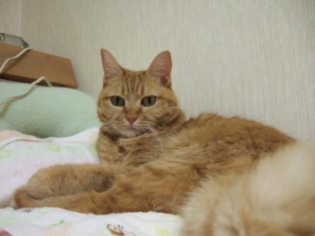 2008_junichibi2220085