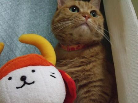 2008_junichibi2220029