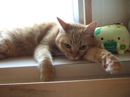 2008_junichibi2260054_2