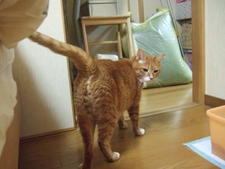 2008_junichibi2240003