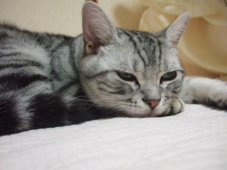 2008_junichibi2290128